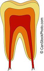 ilustração, dente