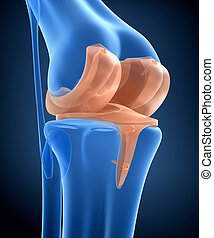 ilustração, dobradiça, titânio, joint., joelho, vista., raio x, 3d
