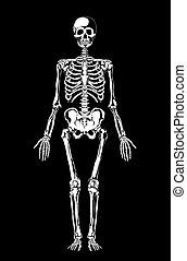 ilustração, esqueleto, layers., black., vetorial, separado, ...
