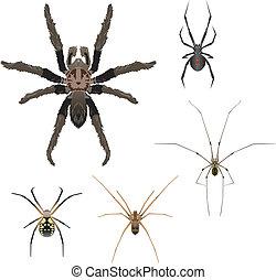ilustrações, aranha, vetorial, cinco