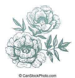 ilustrações, flowers., hand-drawn
