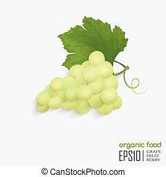 ilustrace, o, osamocený, zrnko vína