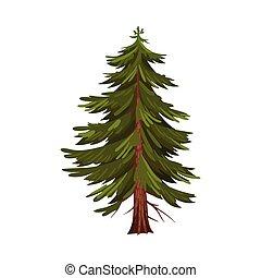 ilustración, árbol hoja perenne, conífero, vector, árbol, follaje, abeto, exuberante