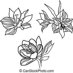 ilustración, acción, flor