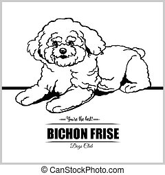 ilustración, bichon, perro, camiseta, -, frise, insignias,...