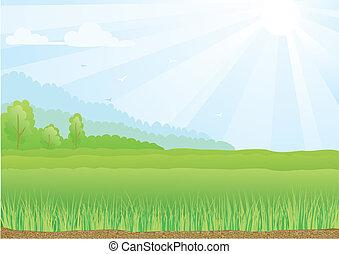 ilustración, de, campo verde, con, sol, rayos, y azul, sky.