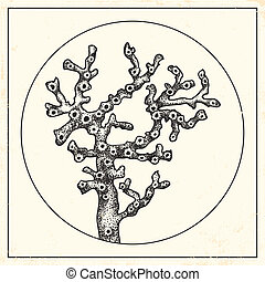 ilustración, de, un, coral