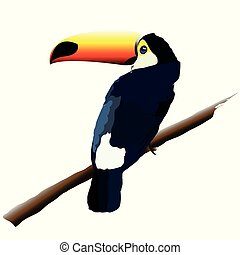 ilustración, de, un, pájaro, toucan.