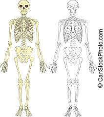 ilustración, esqueleto
