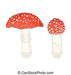 ilustración, fondo., amanita, champiñones blancos, vector