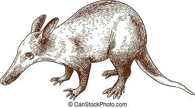 ilustración, grabado, aardvark, dibujo