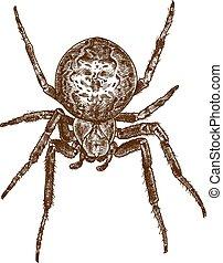 ilustración, grabado, araña, cruz