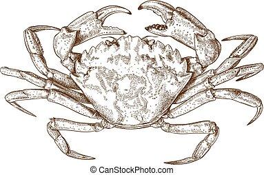 ilustración, grabado, cangrejo