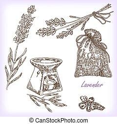 ilustración, lavender., colección, vector, mano, dibujado, ...