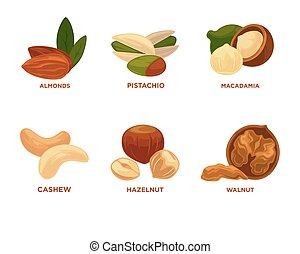 Ilustración, maduro, nuez, nueces, vector, semillas,...