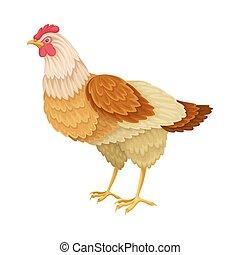 ilustración, vertebrados, de sangre caliente, o, avenidas, gallina, vector