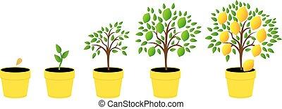 ilustraciones, fases, conjunto, crecimiento, planta