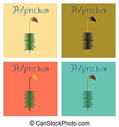 ilustraciones, plano, planta, asamblea, polytrichum