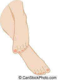 ilustracja, feet, wektor, tło, stopa, biały