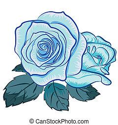 ilustracja, od, blu, róża
