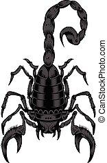 ilustracja, scorpion.