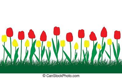 ilustracja, tulips., żółty, flowerbed, czerwony, wektor