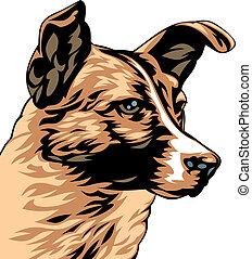 ilustrado, cão