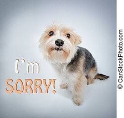 lovely dog beg pardon - I'm sorry, lovely dog beg pardon and...