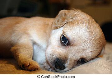 I'm Tired!
