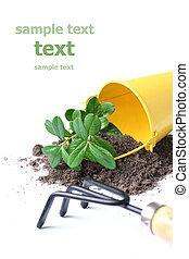 image., 结束, text., 隔离, 概念性, white., 放, gardering, 你