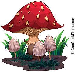image, champignon, énorme