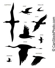 image, dessin, noir, set., vecteur, birds., silhouette