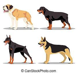 image, ensemble, chiens
