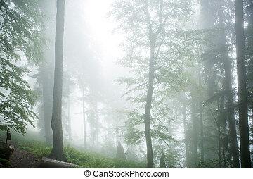 image, forêt, arbres, brumeux