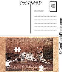 image, gabarit, afrique, vide, guépard, puzzle, vide, carte postale
