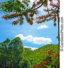 image, hdr, montagne, arbres
