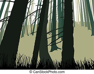 Trunks of coniferous  trees.