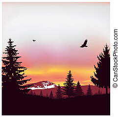 Silhouette of coniferous trees
