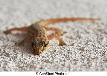 Lizard on a sand - Image made by smartphone. Lizard on a...