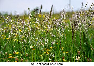 image, numérique, photo, herbe, fleurs, fond