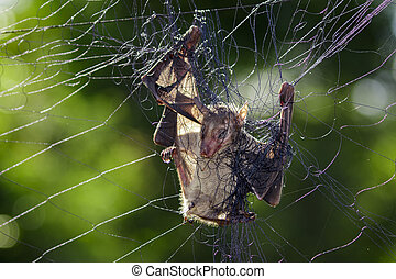 Image of a bat is attached to the net.
