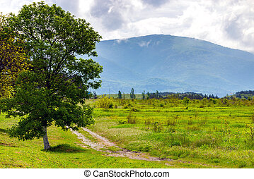 Image of a beautiful alone tree with big crown in spring and dirt road in mountains with clouds on background