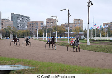 carriage, horse and rider on a horse race at the track