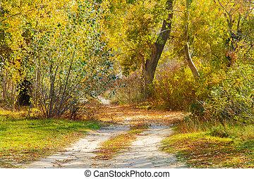 dirt road through the autumn deciduous forest in autumn