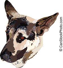 German Shepherd - image of a German Shepherd