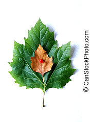 image of a leaf on white background