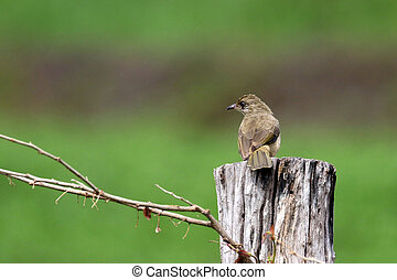 Image of a sparrow perched on the branch