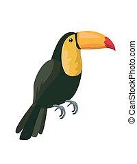 Image of a toucan vector