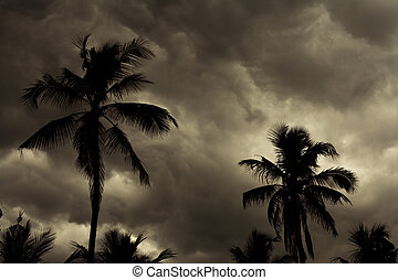 Image of a Tropical Monsoon Skyline Background