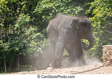 Image of a young elephant on nature background in thailand.
